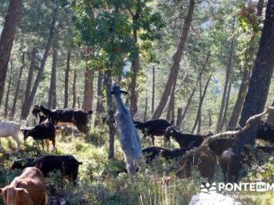 Castañar de la Sierra de San Vicente - Convento del Piélago;excursiones por toledo;excursiones cer